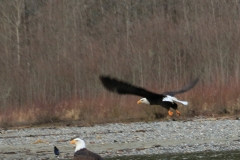 pacific-eagle2