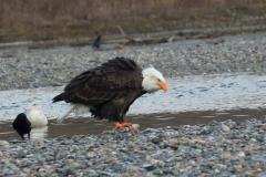 pacific-eagle3