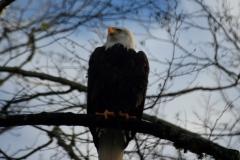 pacific-eagle6