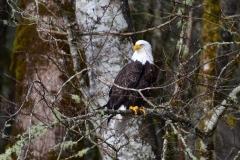eagle1 (1)