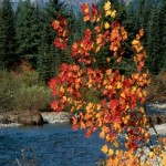 skagit river- raft trips2