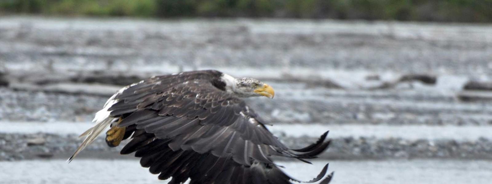 Eagles Adventure