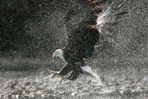 Eagles & Birding